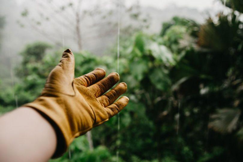 Satsa på proffsig trädgårdsskötsel